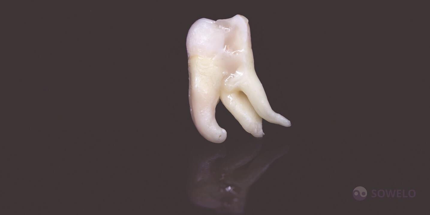 Modrostni zob po puljenju